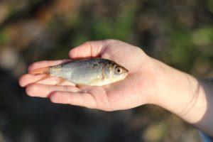 fish-1466459_960_720